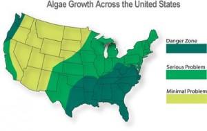 algae-growth